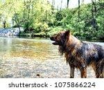 alsatian animal breeds dog... | Shutterstock . vector #1075866224