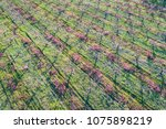 Aerial View To Flowering Peach...