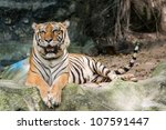 bengal tiger | Shutterstock . vector #107591447