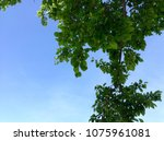 green leaves against blue sky | Shutterstock . vector #1075961081