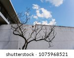 Dry Dead Tree In Blue Sky