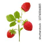 Small photo of Wild strawberry macro isolated on white