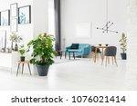 fresh monstera deliciosa in a... | Shutterstock . vector #1076021414