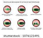 vector illustration of the... | Shutterstock .eps vector #1076121491