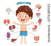 vector illustration of human... | Shutterstock .eps vector #1076189351