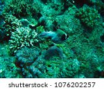 coral reef in red sea.... | Shutterstock . vector #1076202257