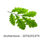 young oak leaves on a white... | Shutterstock . vector #1076241374