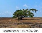 Tree Sits Alone In The Plains