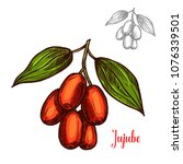 jujube berry color sketch icon. ... | Shutterstock .eps vector #1076339501