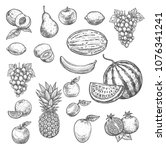 fruits sketch icons of apricot  ... | Shutterstock .eps vector #1076341241