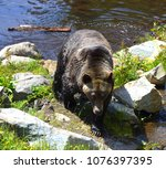 the grizzly bear also known as...   Shutterstock . vector #1076397395