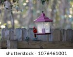 bright red male northern... | Shutterstock . vector #1076461001