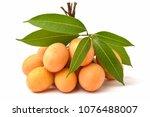 sweet marian plum thai fruit... | Shutterstock . vector #1076488007