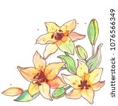 ink  pencil  watercolor lily... | Shutterstock .eps vector #1076566349