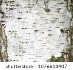 natural background of birch...   Shutterstock . vector #1076613407