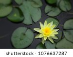 the image of the yellow lotus... | Shutterstock . vector #1076637287