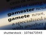 Small photo of gamete gamete concept.