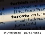 Small photo of furcate furcate concept.