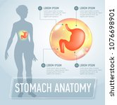 vector stomach infographics... | Shutterstock .eps vector #1076698901