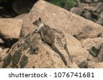 the squirrel is stay on the... | Shutterstock . vector #1076741681