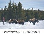 the bisons wild life in... | Shutterstock . vector #1076749571