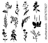 silhouettes of plant ... | Shutterstock .eps vector #1076757827