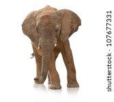 portrait of an elephant bull on ... | Shutterstock . vector #107677331