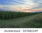 """""""Cornfield at Sunset"""" A cornfield and a Summer sunset in rural Central New Jersey. - stock photo"""