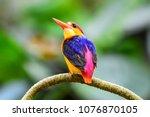 beautiful black backed... | Shutterstock . vector #1076870105