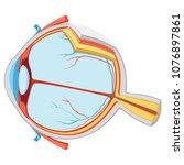 vector illustration of eye... | Shutterstock .eps vector #1076897861