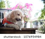 close up selective focus on... | Shutterstock . vector #1076954984