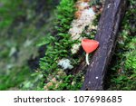 Pink born cup mushroom - stock photo