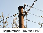 post with wires | Shutterstock . vector #1077051149