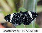 wonderful blue butterfly | Shutterstock . vector #1077051689