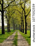 country road with oak trees on... | Shutterstock . vector #1077052559