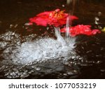 roses in the water of the... | Shutterstock . vector #1077053219