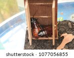 two cockroach in their house | Shutterstock . vector #1077056855