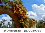 evergreen bougainvillea glabra... | Shutterstock . vector #1077059789
