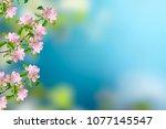 blossoming branch apple. bright ... | Shutterstock . vector #1077145547
