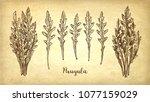 ink sketch of arugula on old...   Shutterstock .eps vector #1077159029