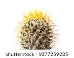close up cactus isolated on... | Shutterstock . vector #1077259235