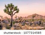 joshua tree landscape   Shutterstock . vector #1077314585