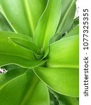 Small photo of Beautiful pattern green leave or multiplex of leave on soft top