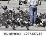 feeding the pigeons by the dozens