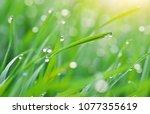 macro of raindrop. composition... | Shutterstock . vector #1077355619