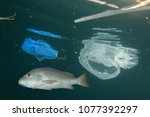 fish and plastic pollution.... | Shutterstock . vector #1077392297
