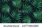 vector palm frond. tropical... | Shutterstock .eps vector #1077481085
