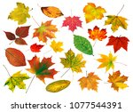 set of bright beautiful... | Shutterstock . vector #1077544391