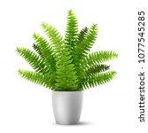 vector realistic fern in a pot. ... | Shutterstock .eps vector #1077545285