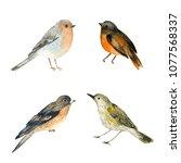 watercolor bird. hand painted... | Shutterstock . vector #1077568337